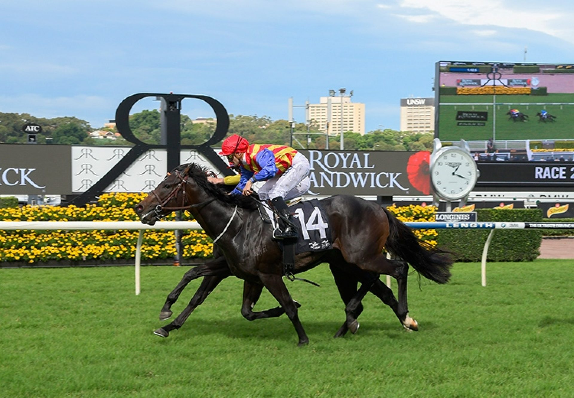 Pierata (Pierro) winning the G3 BRC Vo Rogue Plate at Doomben
