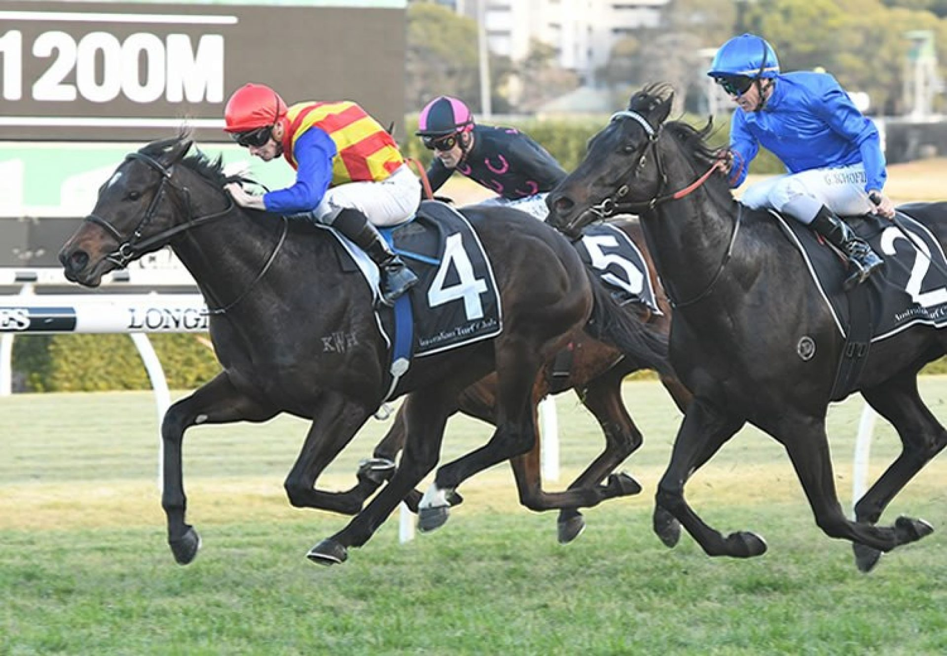 Pierata (Pierro) winning the G2 Missile Stakes at Randwick