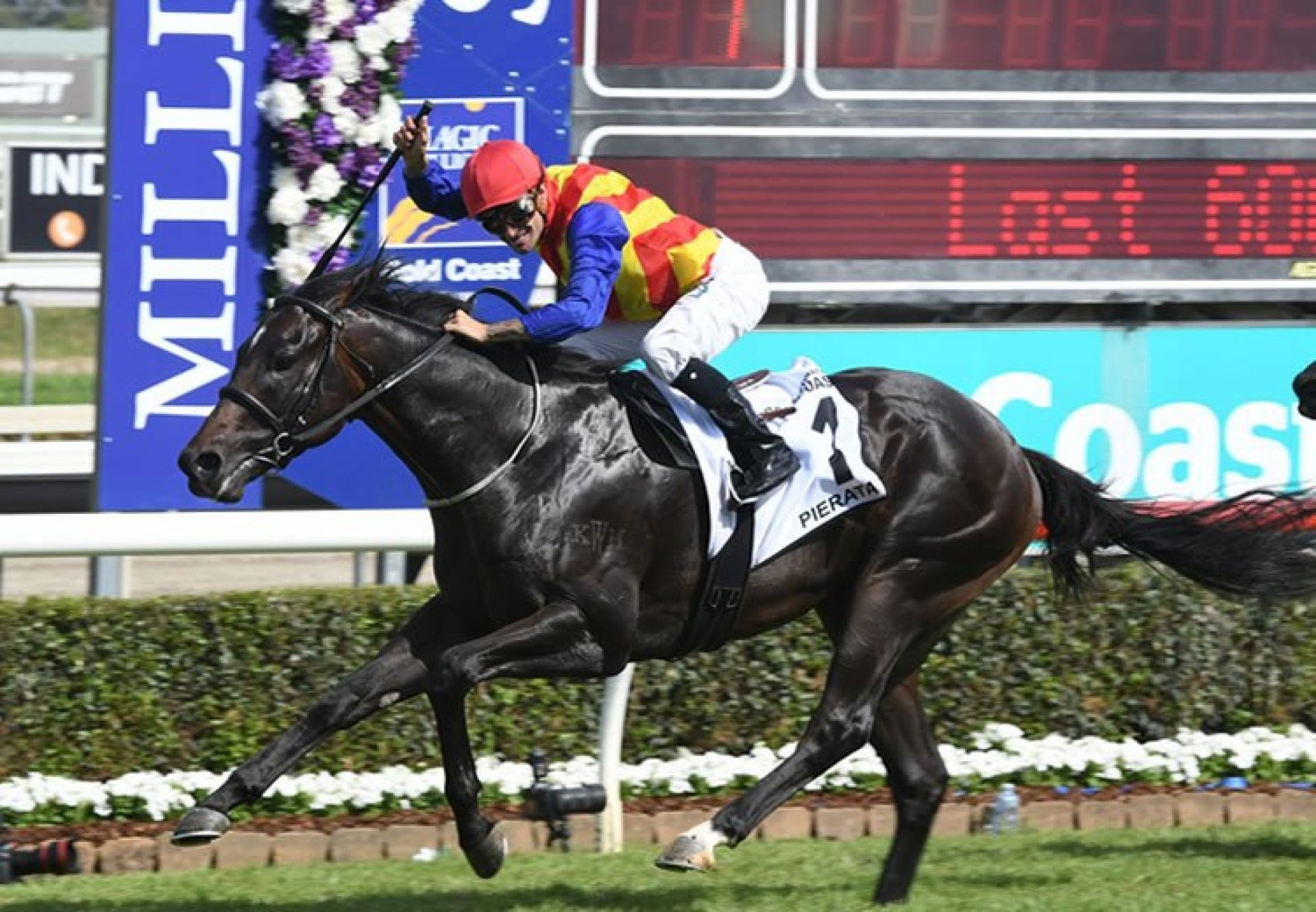 Pierata (Pierro) winning the Gold Coast Magic Millions 3YO Guineas