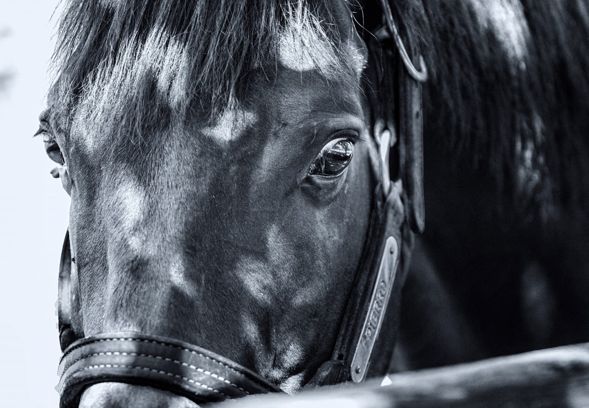 Pierro Close Up