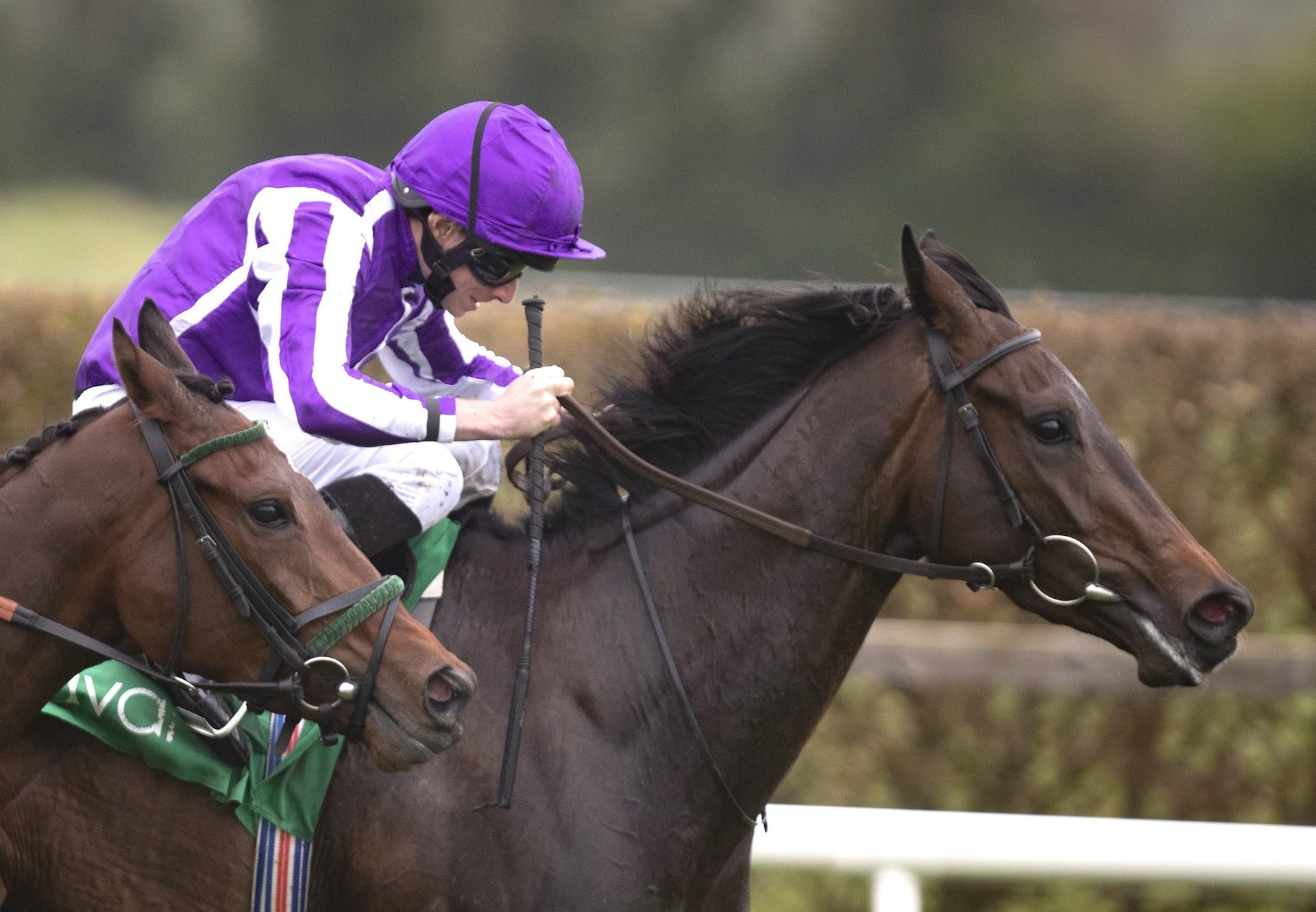 Pink Dogwood (Camelot) Wins The Salsabil Stakes at Navan