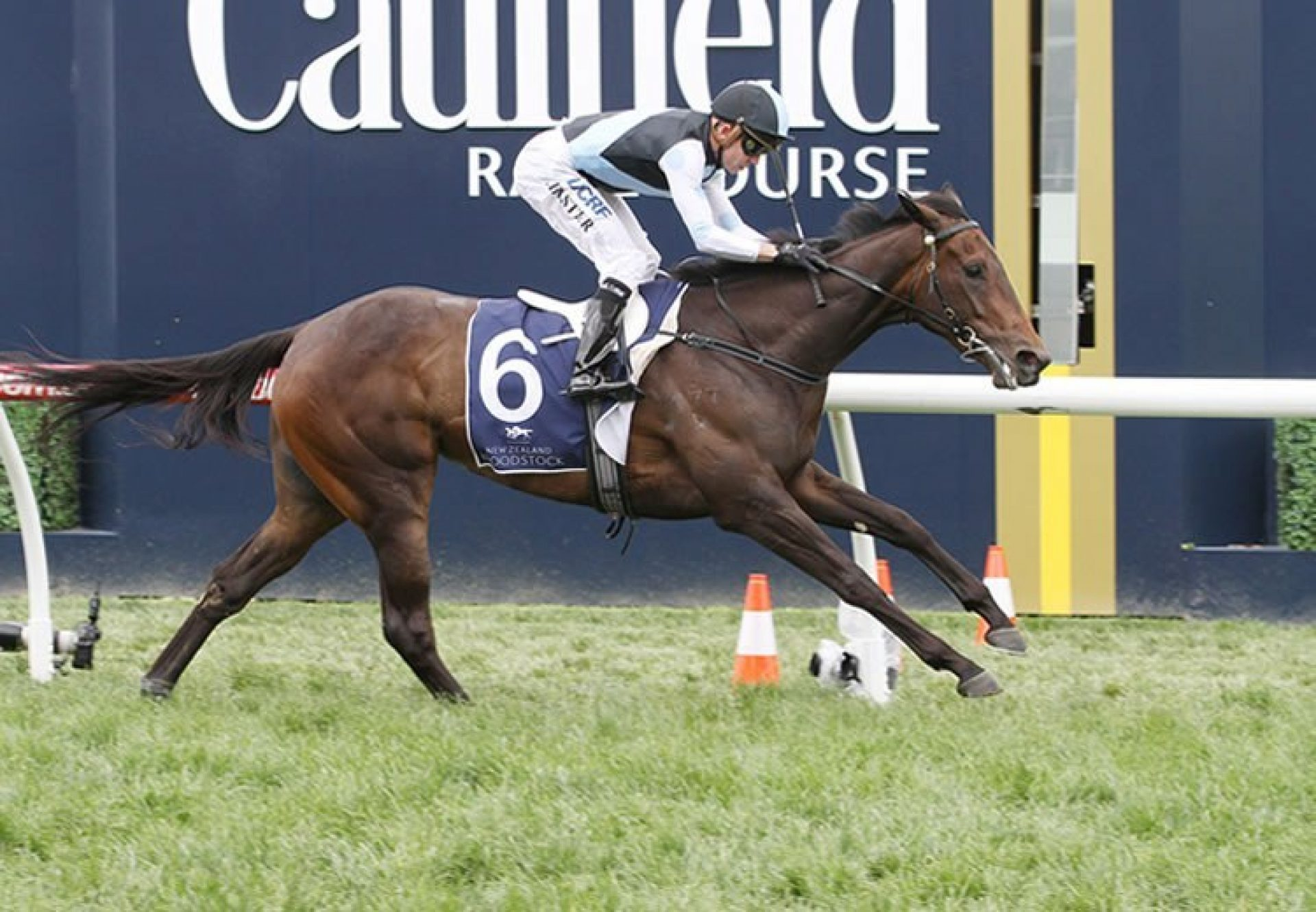 Pinot (Pierro) winning the G3 MRC Ethereal Stakes at Caulfield