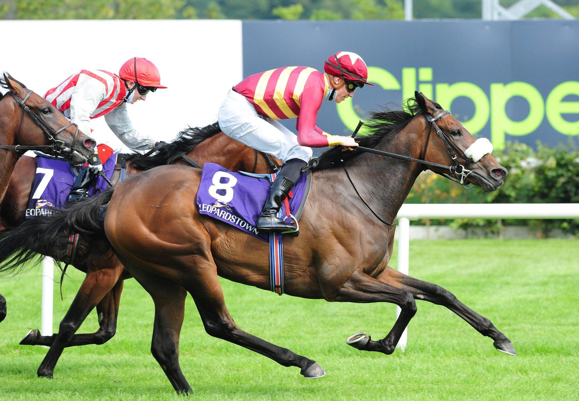 Pista (American Pharoah) Wins the Listed Vinnie Roe Stakes At Leopardstown