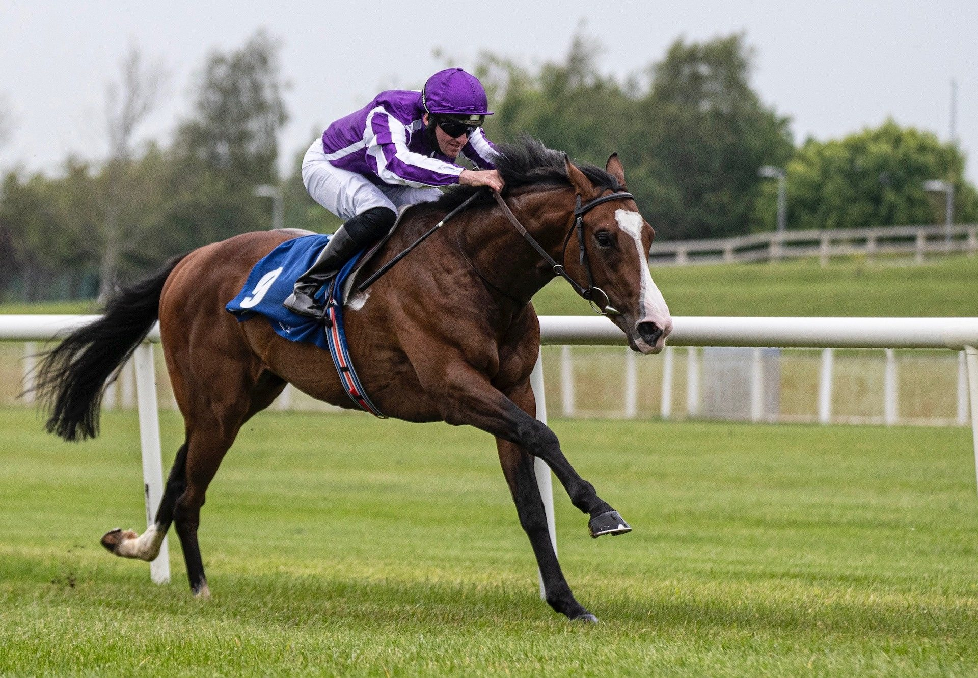 Point Lonsdale (Australia) Wins On Debut At The Curragh