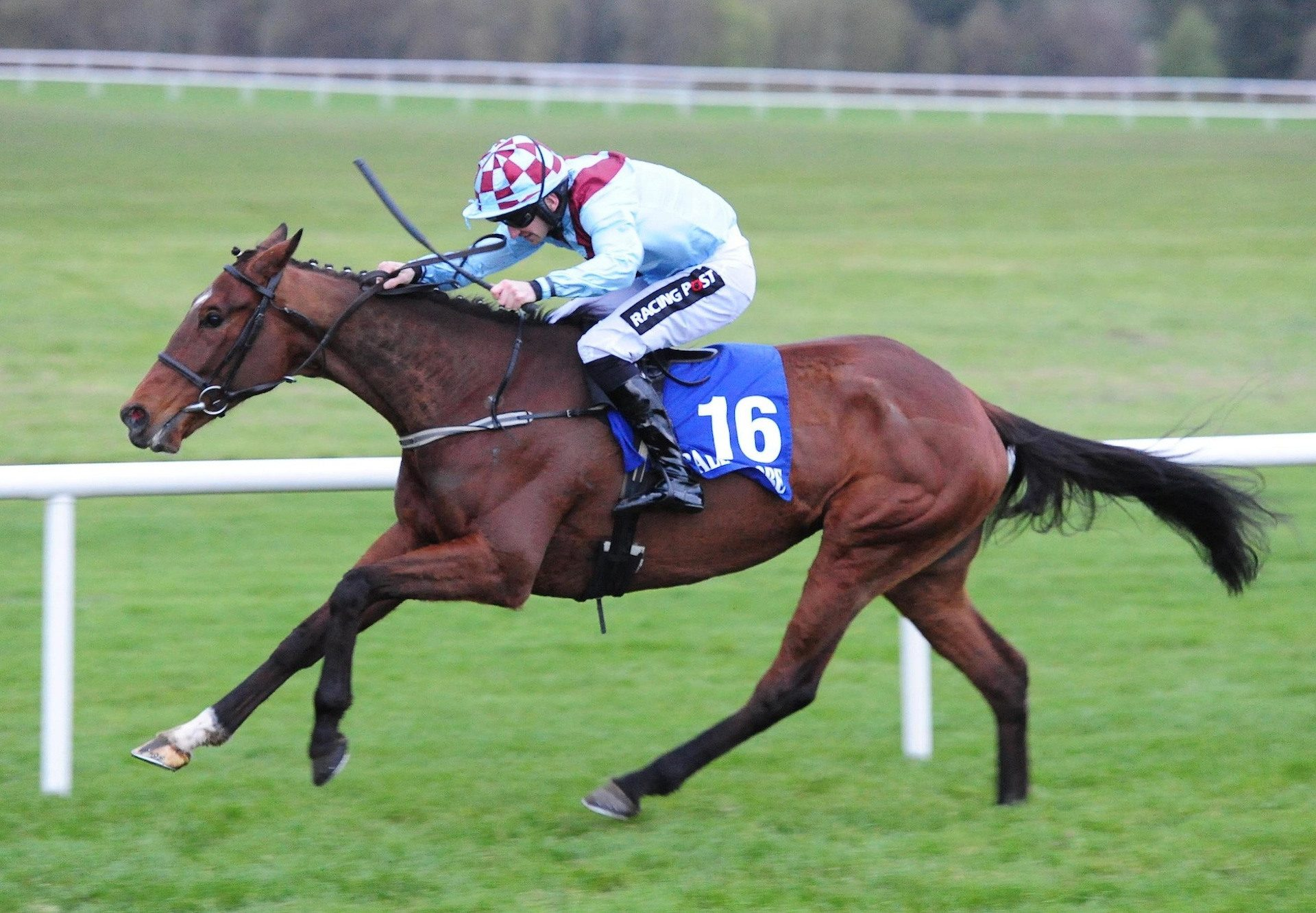 Pont Aval (Soldier Of Fortune) Wins At Ballinrobe