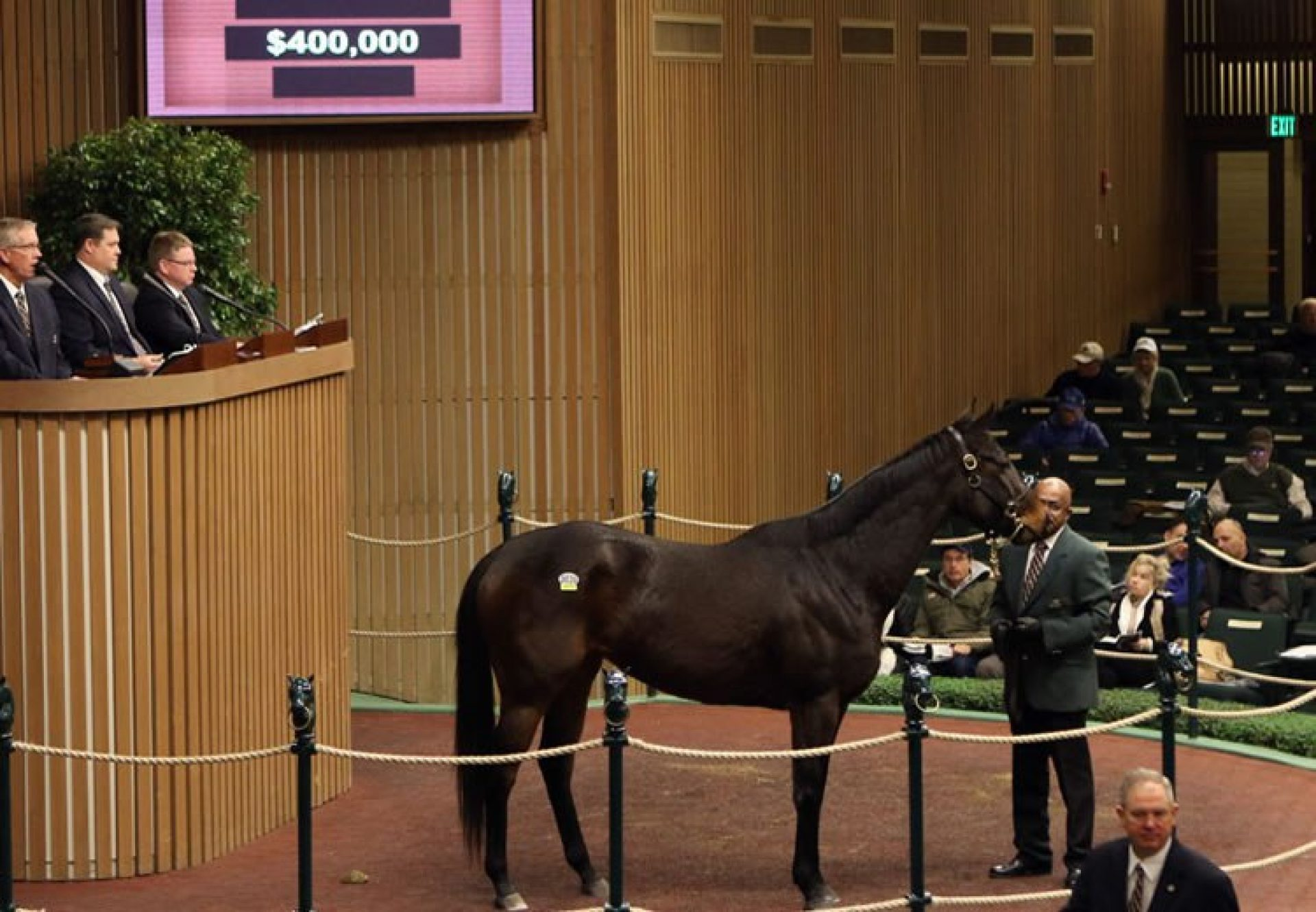 Premier Steps (Footstepsinthesand) selling for $400,000 at Keeneland