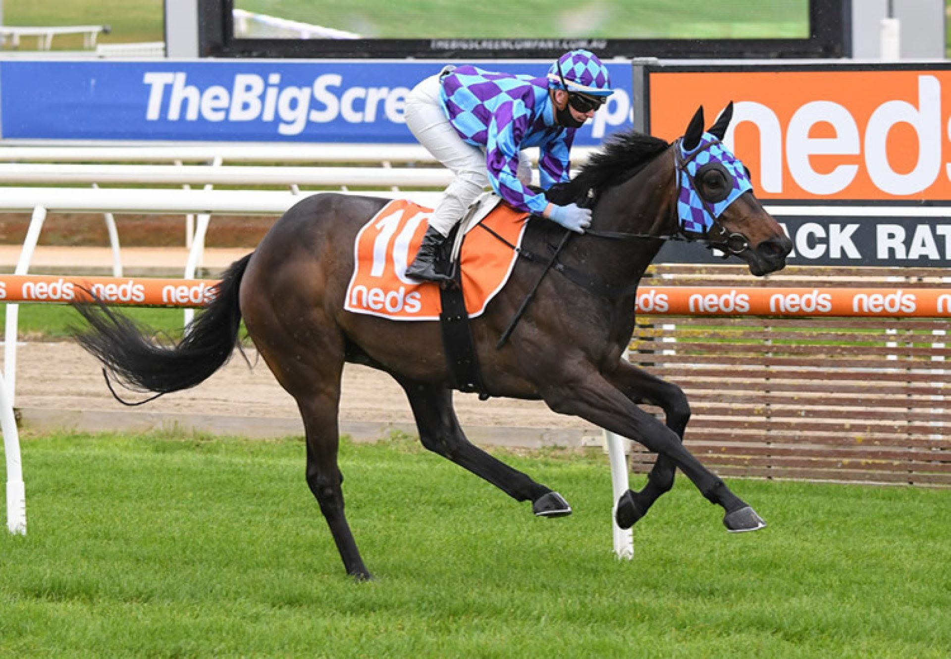 Pride of Jenni winning at Mornington
