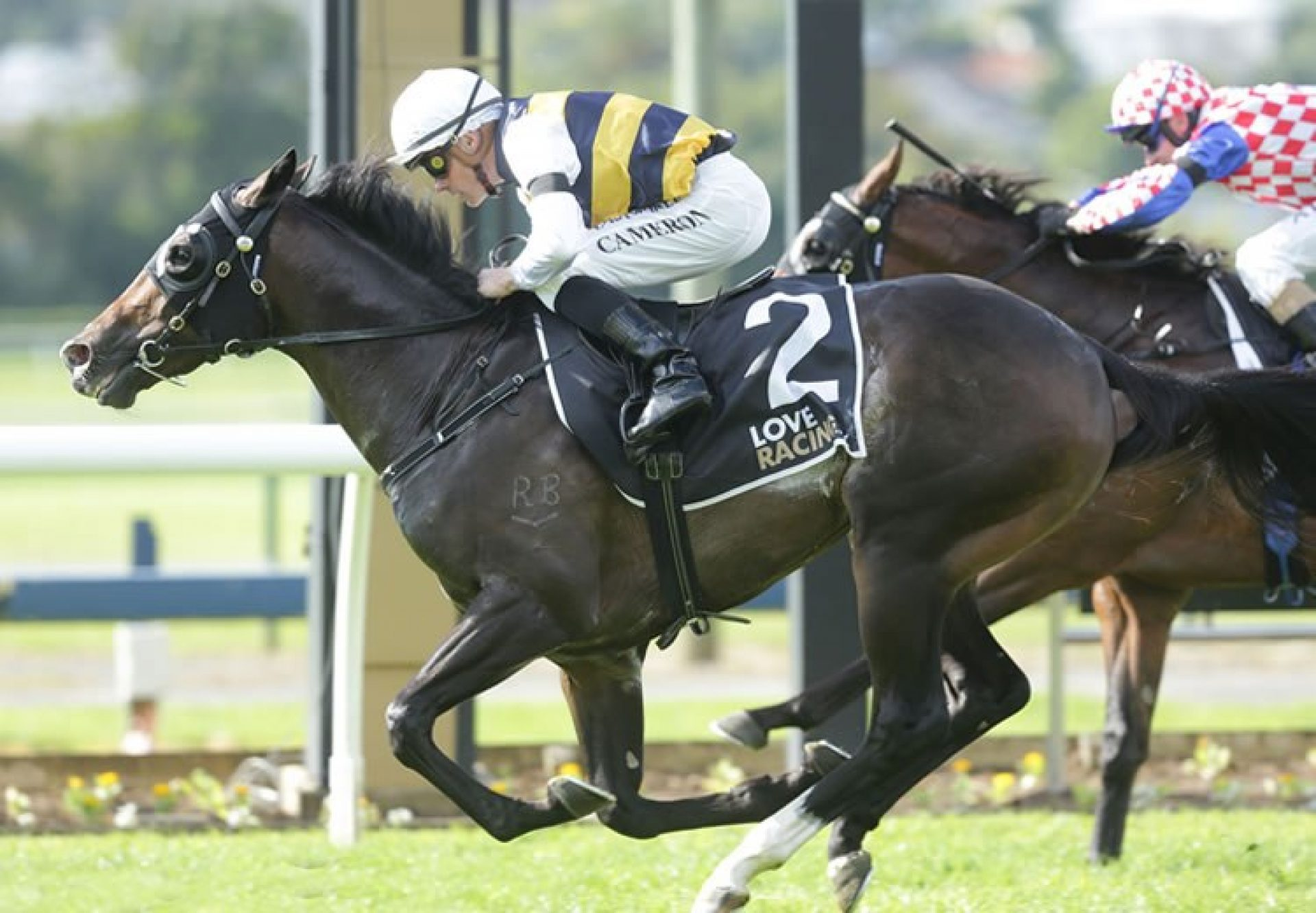 Quick Thinker (So You Think) winning the Listed Champagne Stakes at Ellerslie