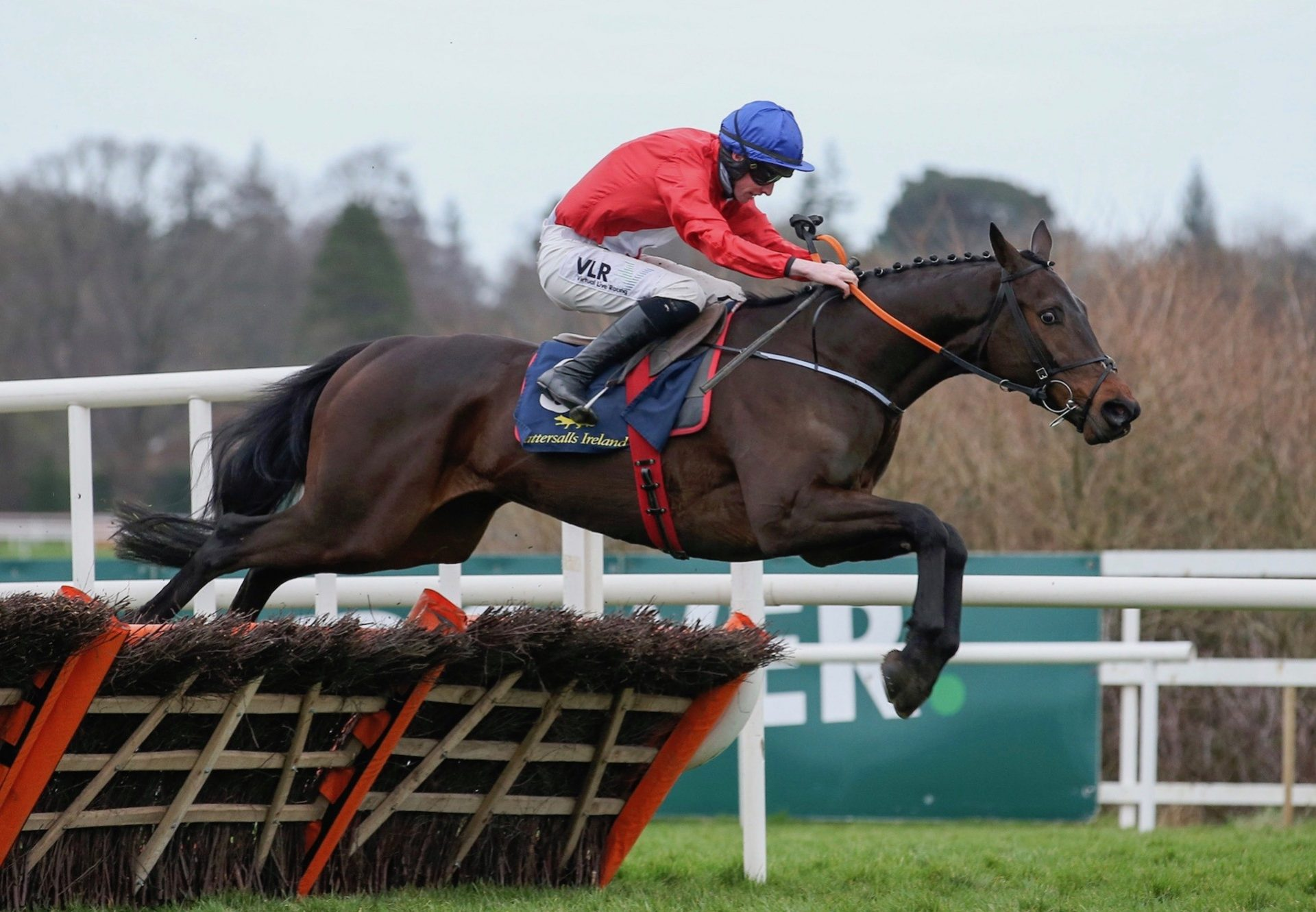Quilixios (Maxios) Wins The Grade 1 Spring Juvenile Hurdle at Leopardstown