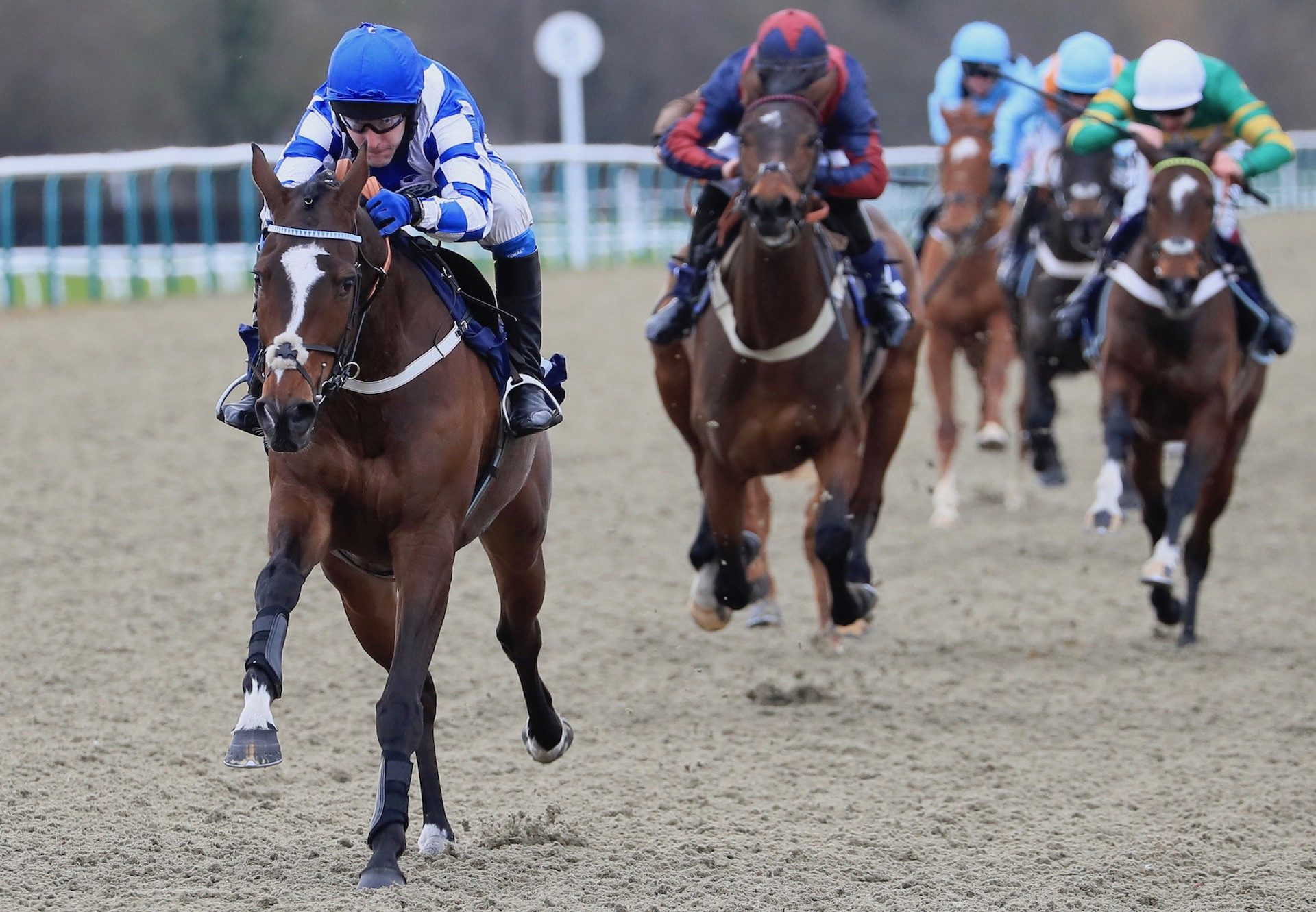 Robelli (Getaway) Wins The Bumper At Lingfield