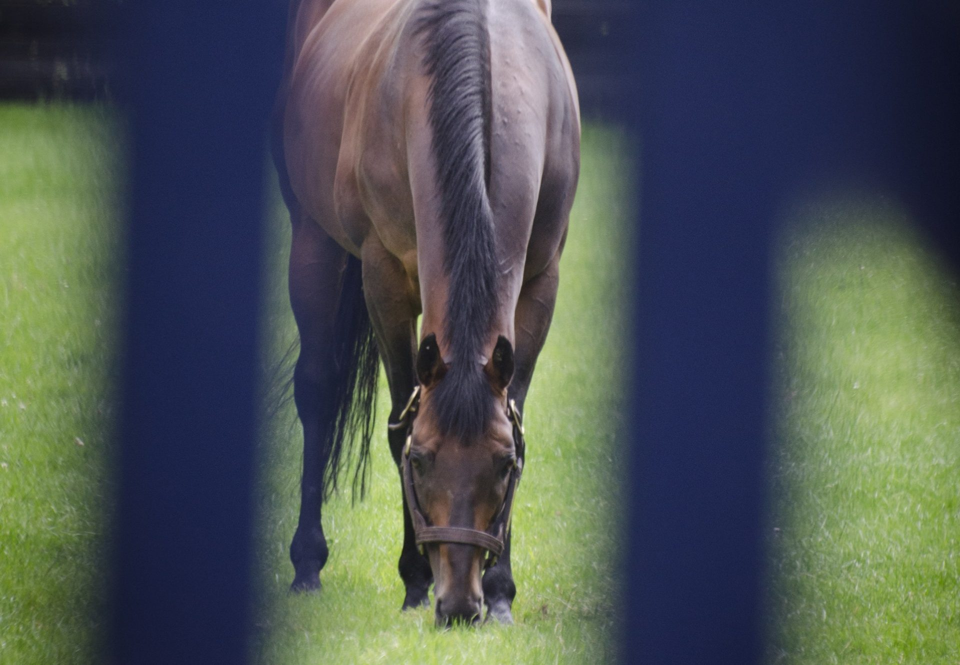 Magic Of Light (Flemensfirth) Captures A Grade 2 Contest At Ascot