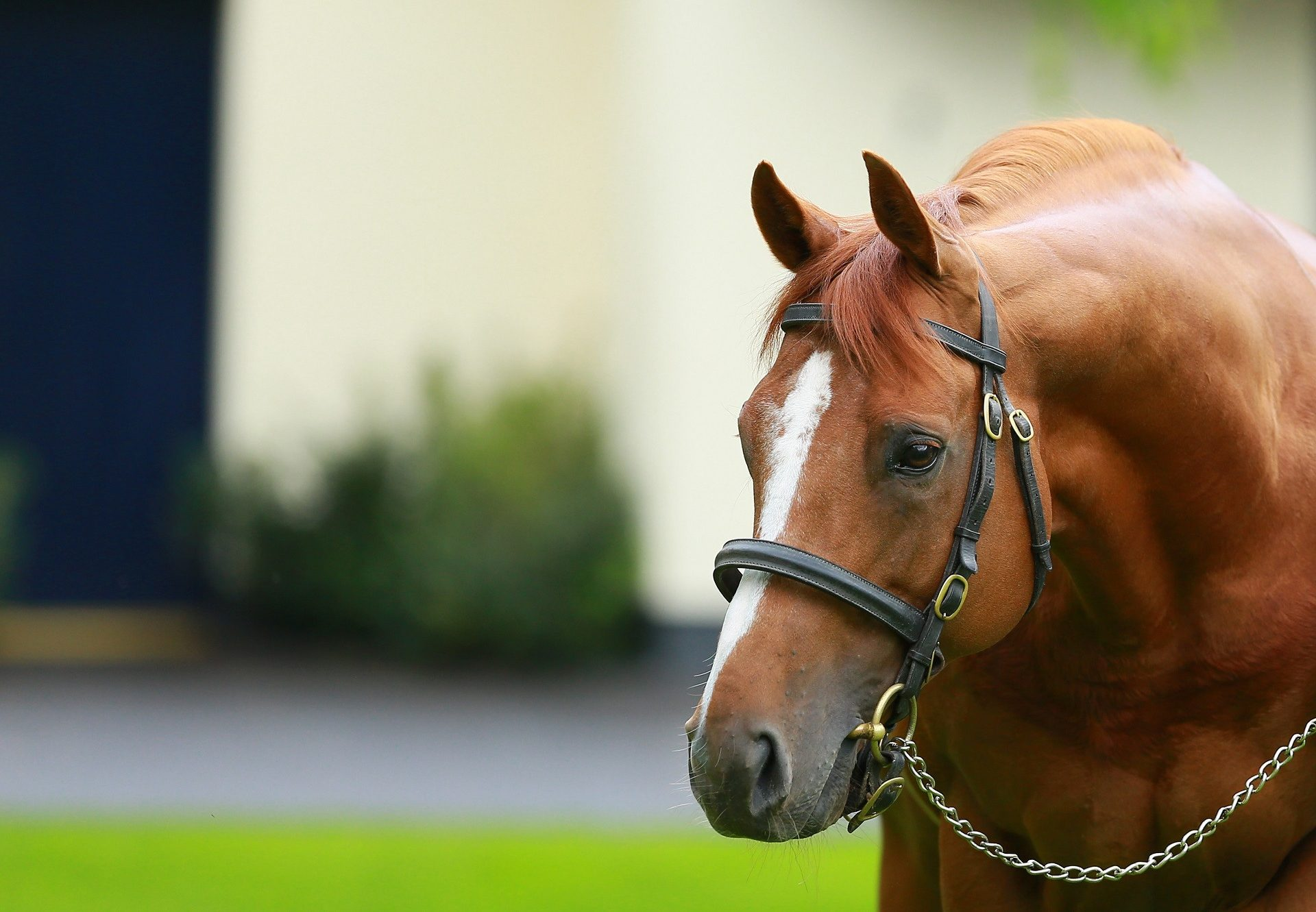 Ruler Of The World In The Stallion Yard