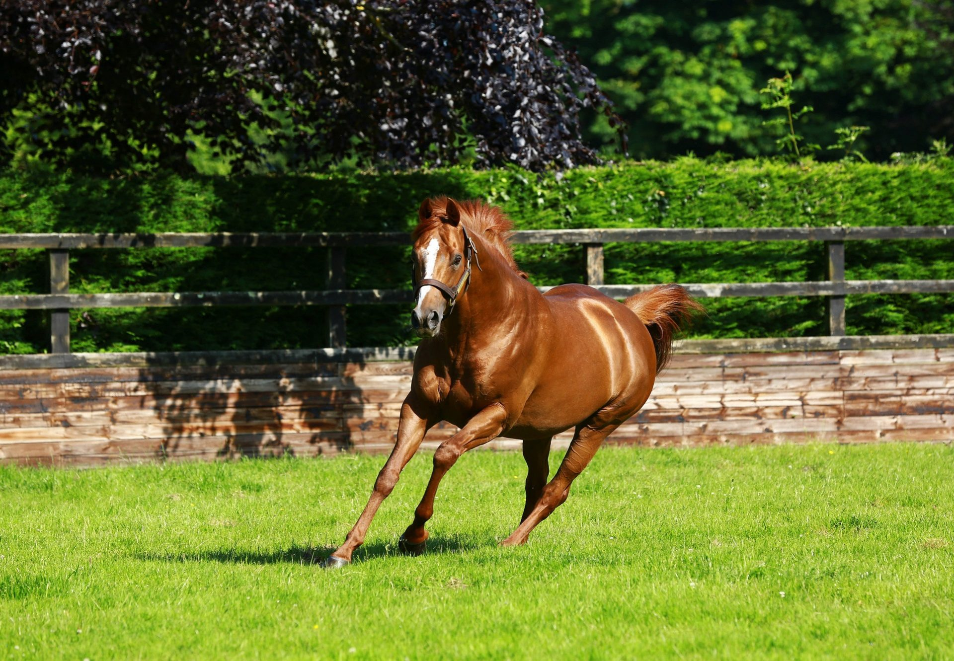 Ruler Of The World Paddock
