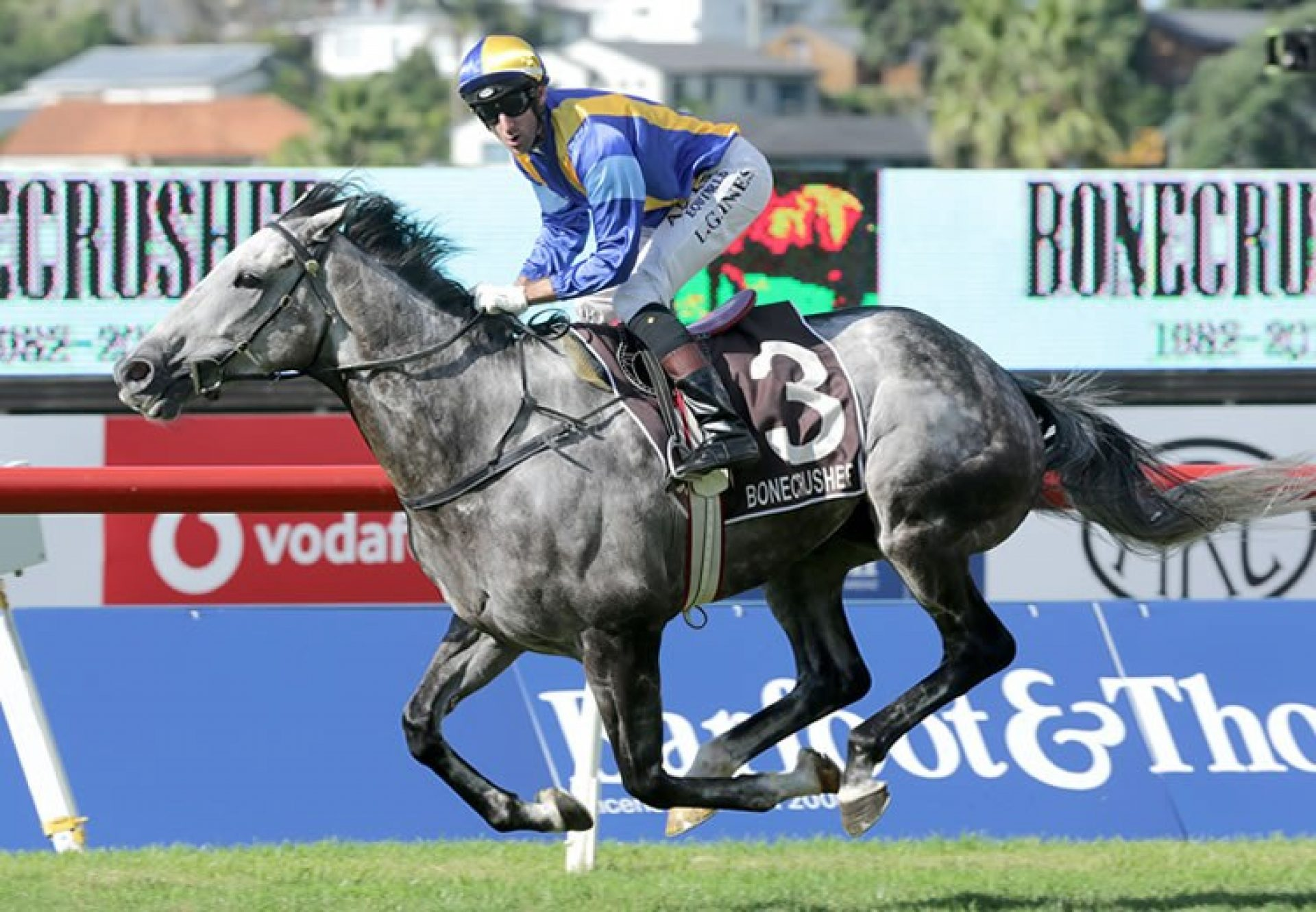 Saint Emilion (Mastercraftsman) winning the G1 Bonecrusher New Zealand Stakes