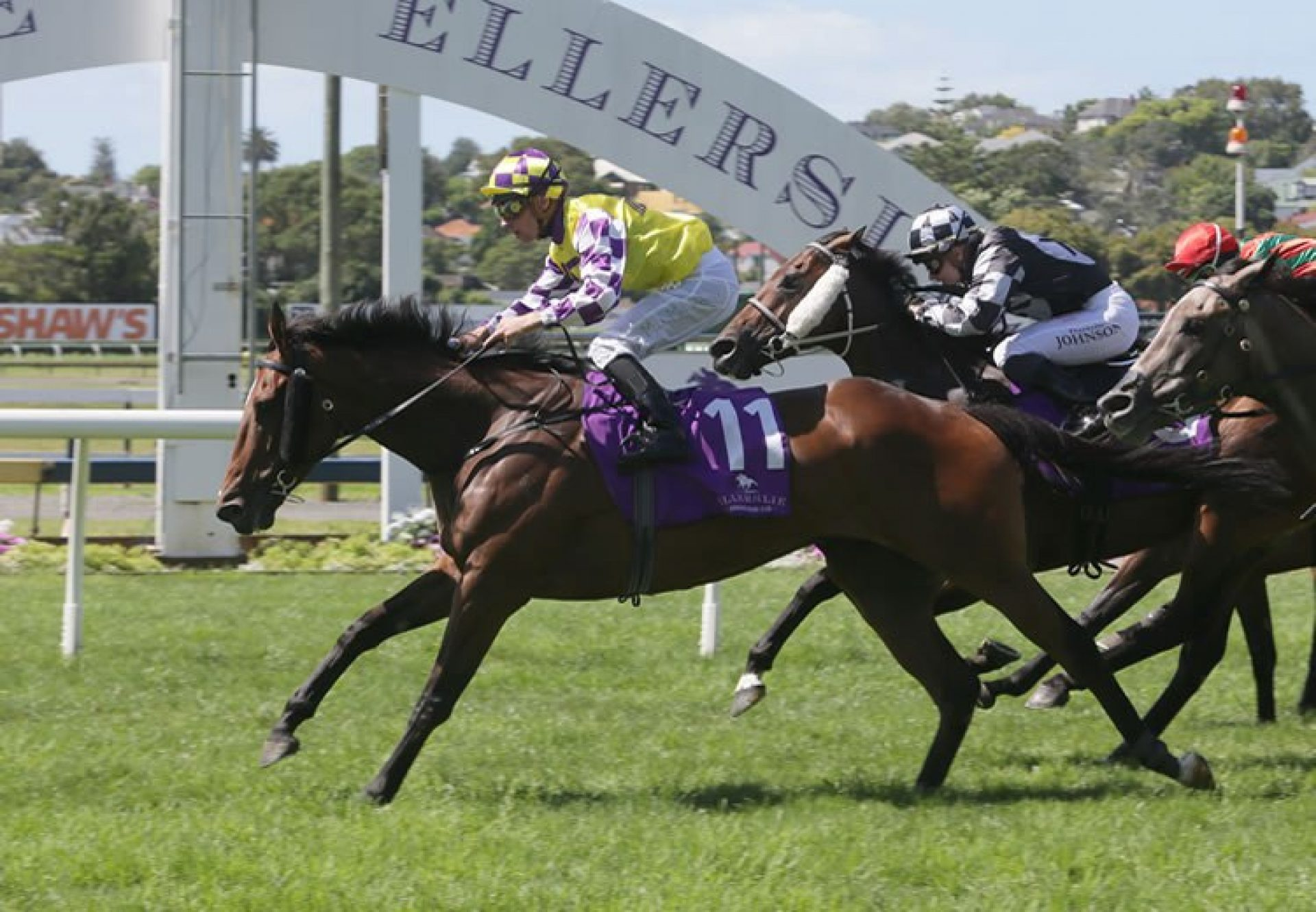 Sacred Master (Mastercraftsman) winning the G2 o Racing Syndications Avondale Cup at Ellerslie