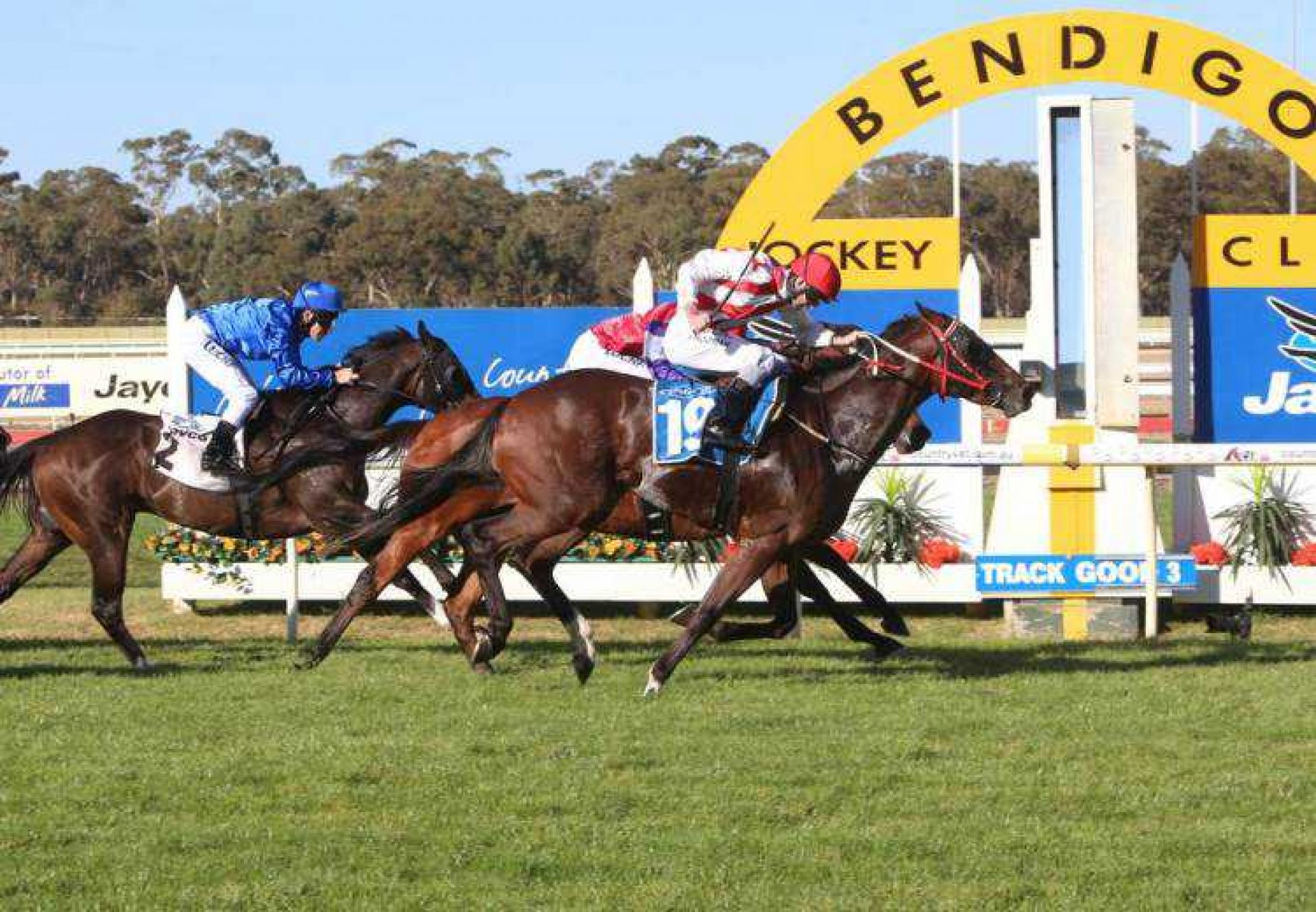 Setinum (Holy Roman Empero) winning the Listed Listed Bendigo Guineas at Bendigo