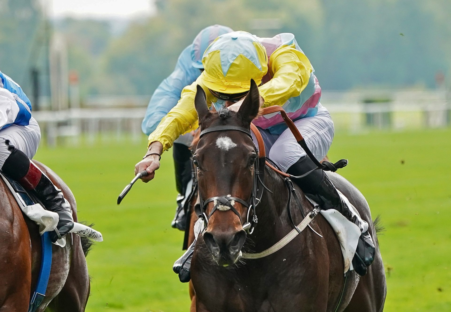Shadn (No Nay Never) wins Gr. 2 Criterium De Maisons Laffitte