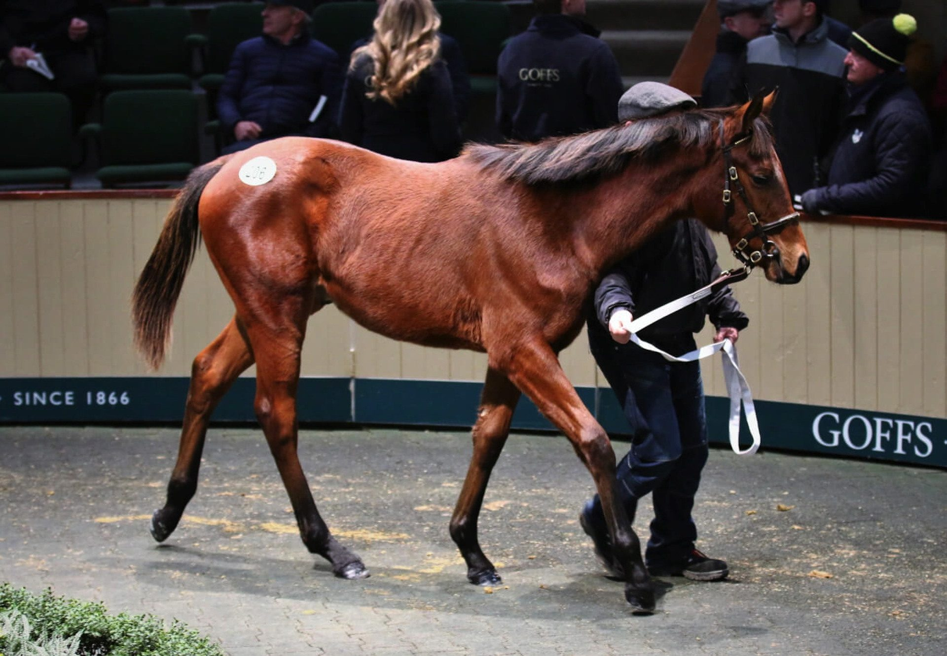 Soldier Of Fortune Colt Tops Goffs December Nh Sale