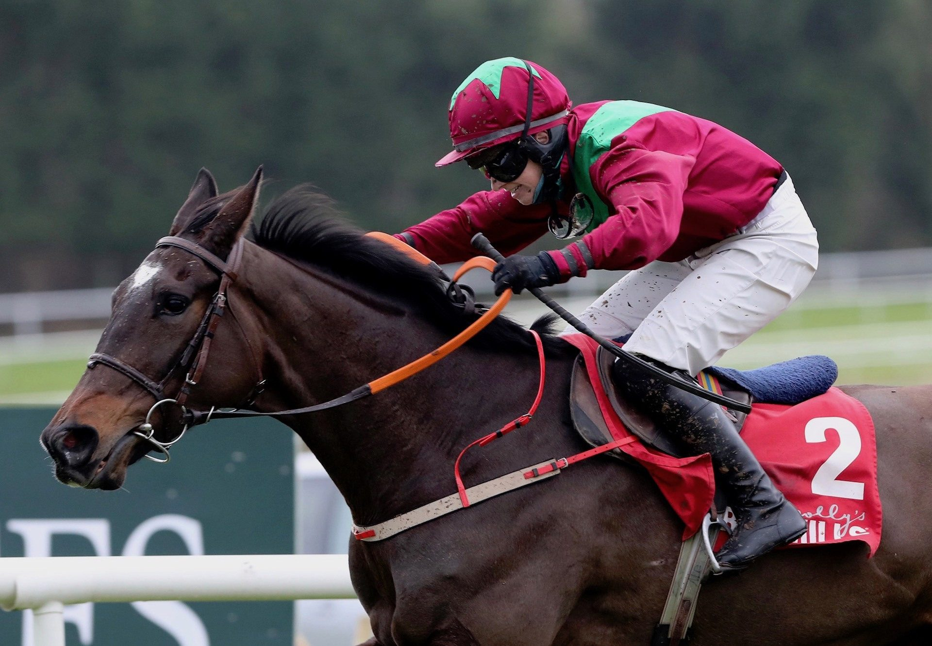 Song Of Earth (Mahler) Wins The Maiden Hurdle At Gowran Park