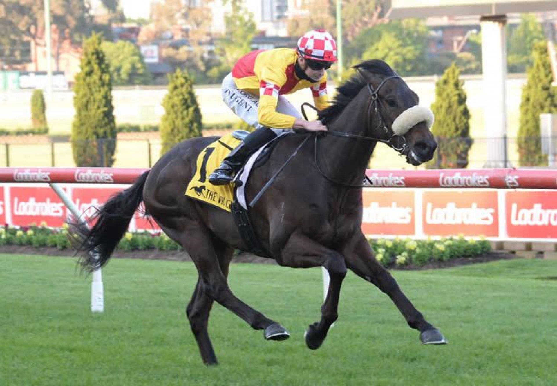 Tanker (Pride Of Dubai) winning at Moonee Valley