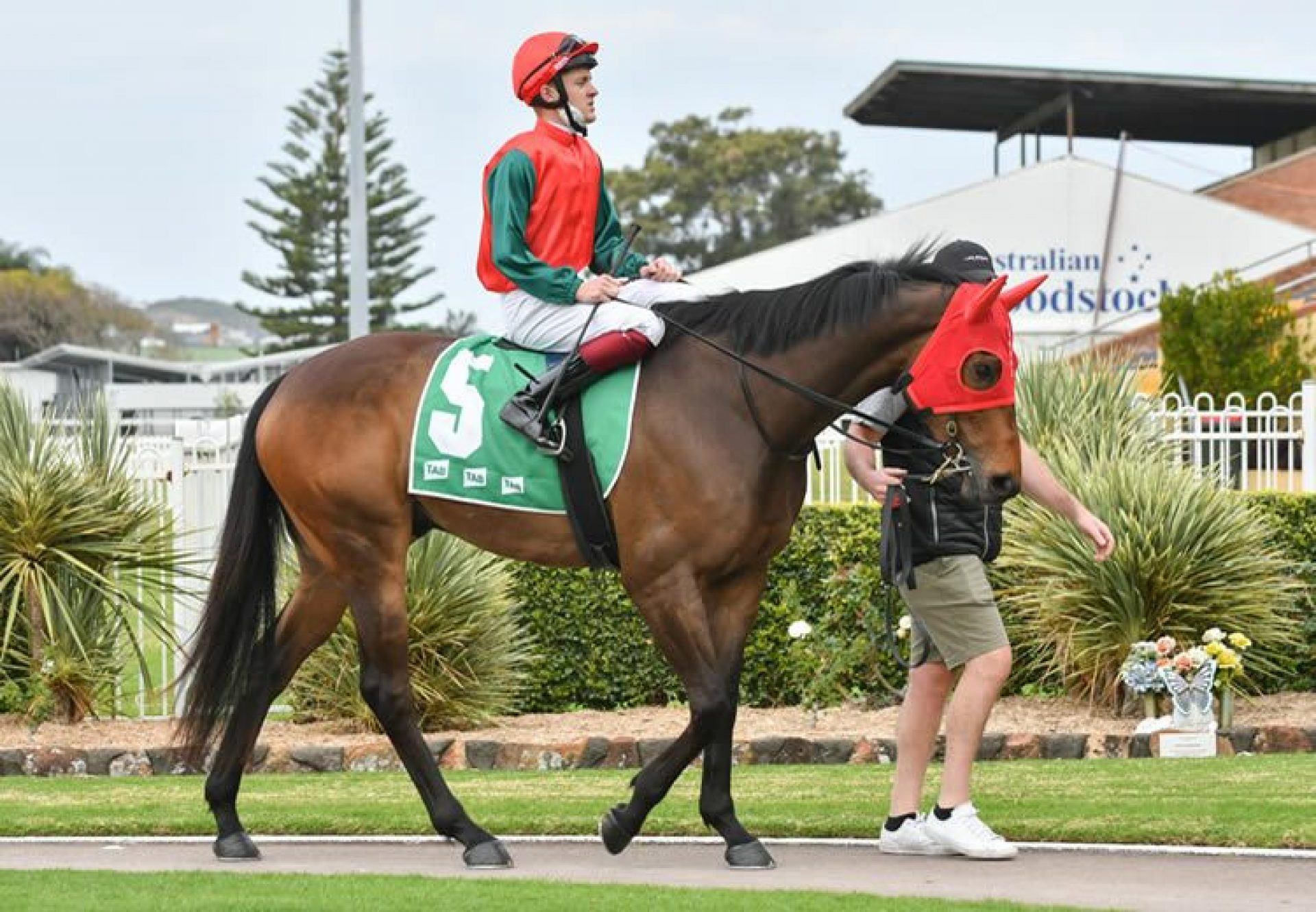 The Denzel (Adelaide) after winning at Wyong
