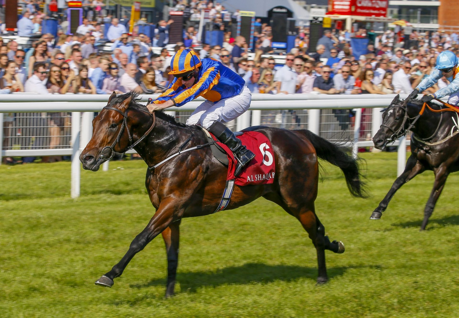 The Irish Rover (No Nay Never) winning a condition stakes at Newbury