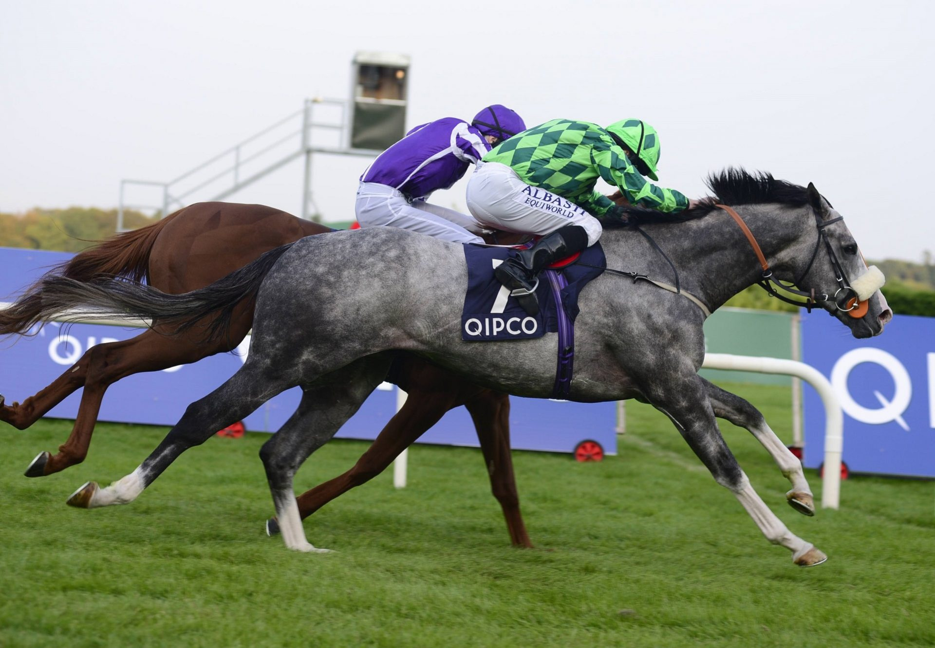 The Grey Gatsby (Mastercraftsman) winning the G1 Irish Champion Stakes at Leopardstown