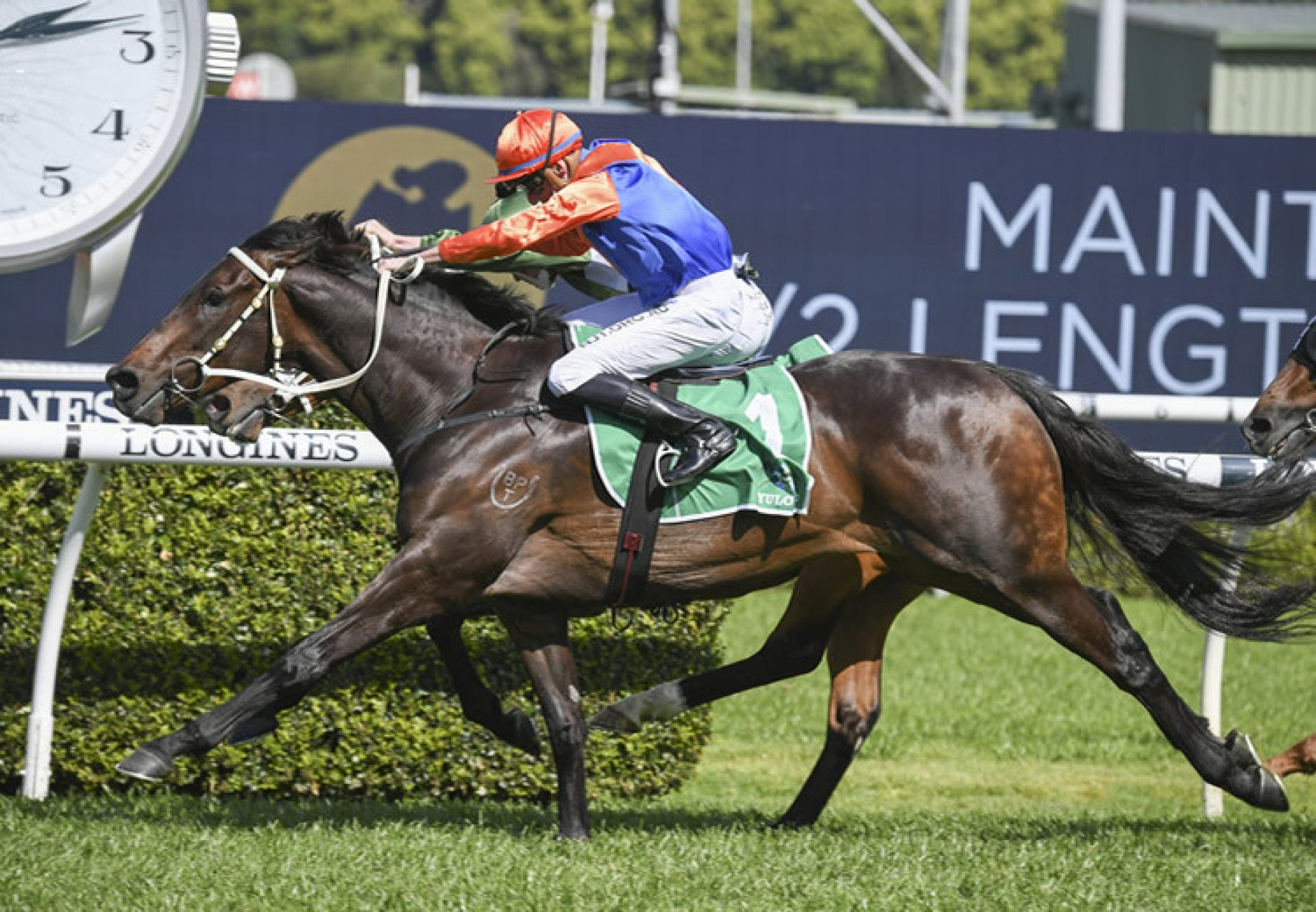 Think It Over (So You Think) winning the Gr.2 Hill Stakes at Randwick