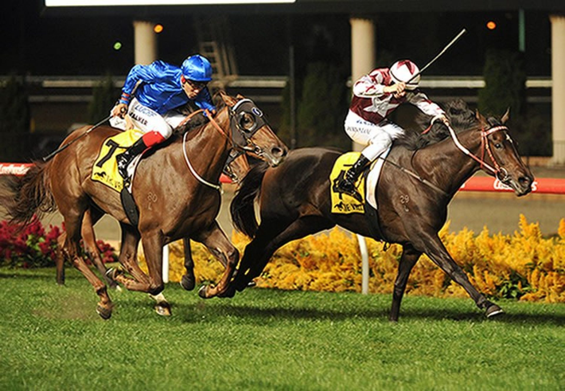 Think Bleue (So You Think) winning the G3 Alexandra Stakes at Moonee Valley