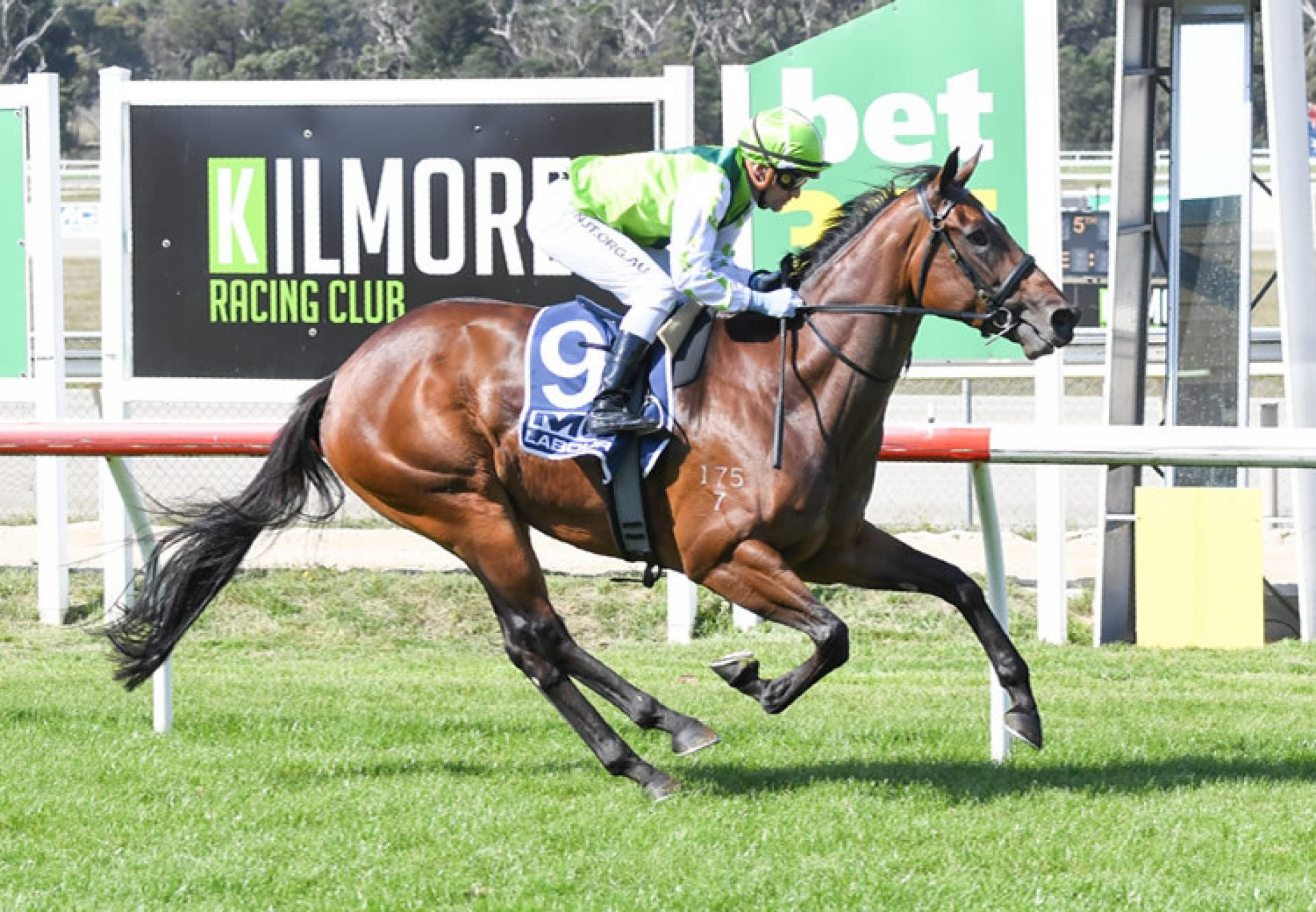 Transplant (Pride Of Dubai) winning at Kilmore