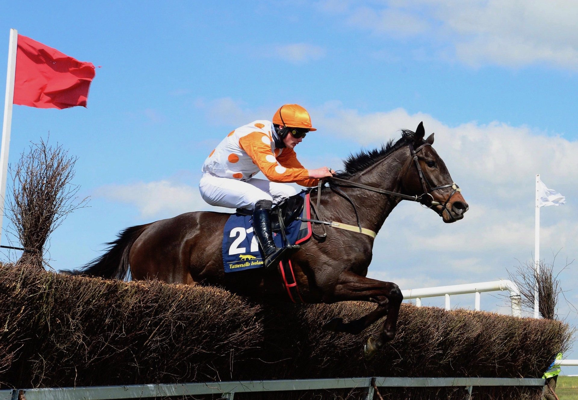 Trickalight (Leading Light) Wins The Five Year Old Mares Maiden At Fairyhouse
