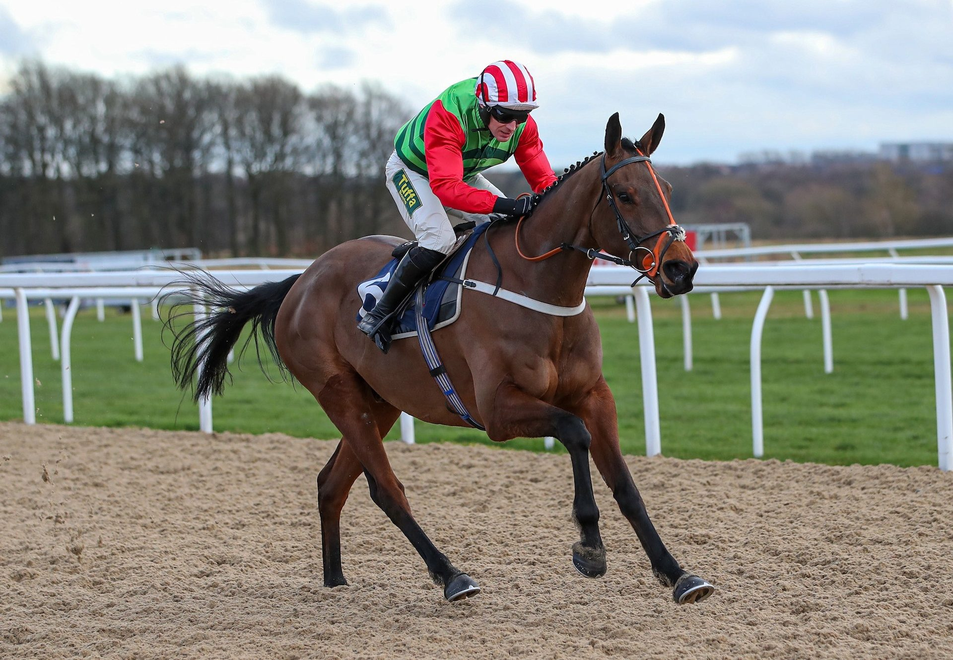 Tupelo Mississippi (Yeats) Wins Bumper At Newcastle
