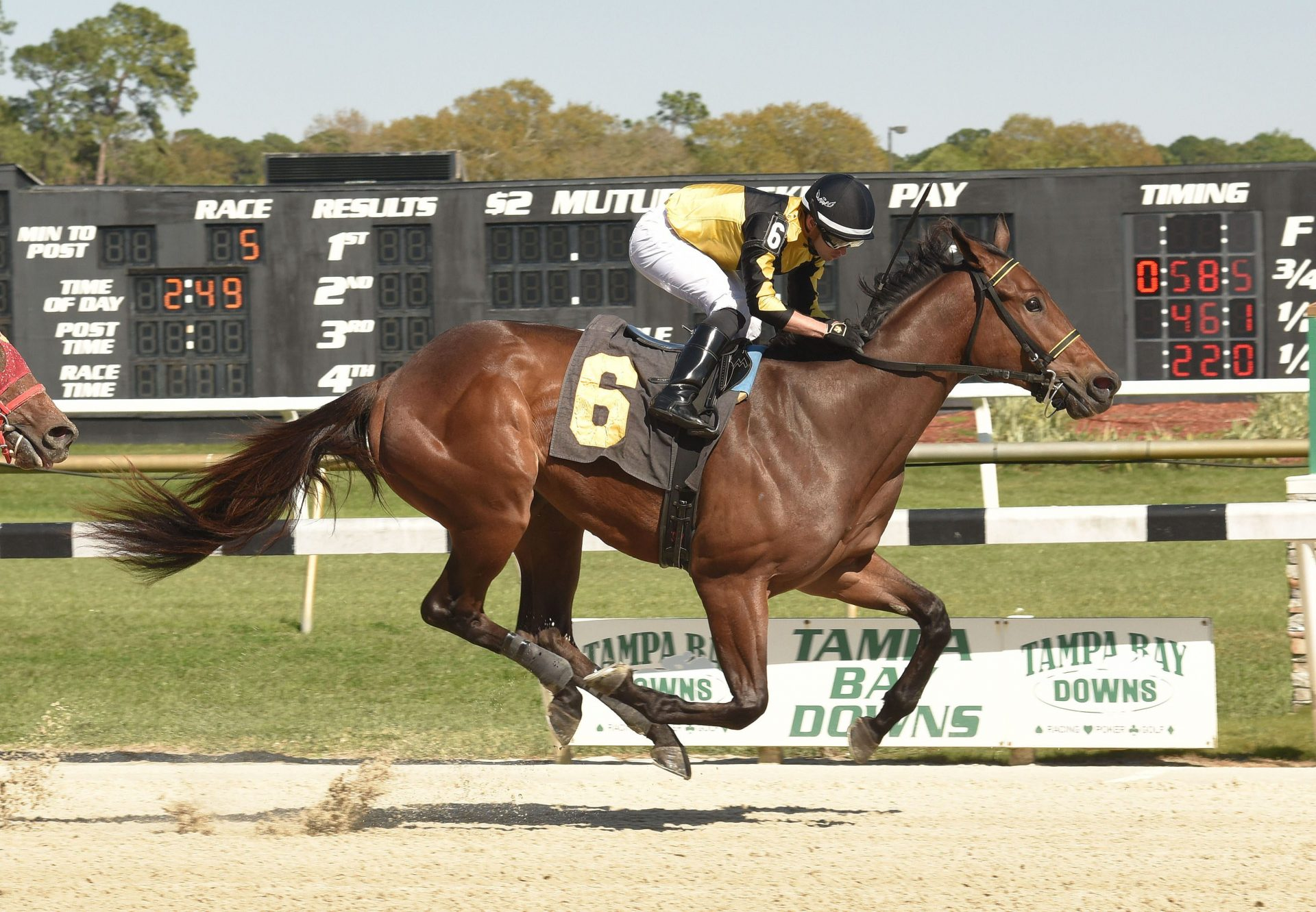 Uncle Bud (Uncle Mo) Tampa Maiden Win