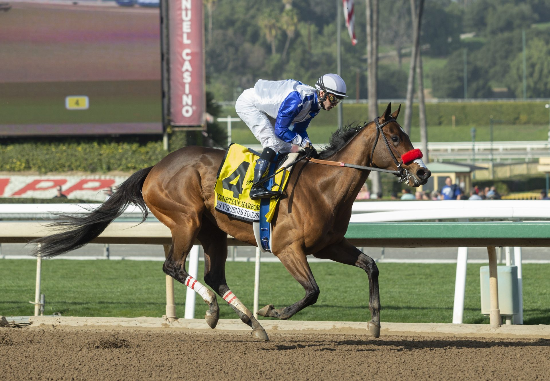 Venetian Harbor (Munnings) Wins G2 Las Virgenes Stakes at Santa Anita