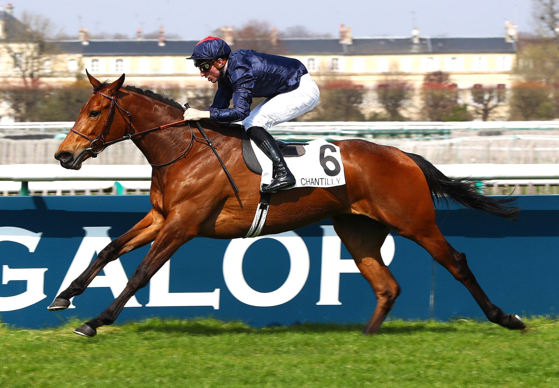 Villa Damore (Mastercraftsman) winning the Prix de Brunehaut at Chantilly