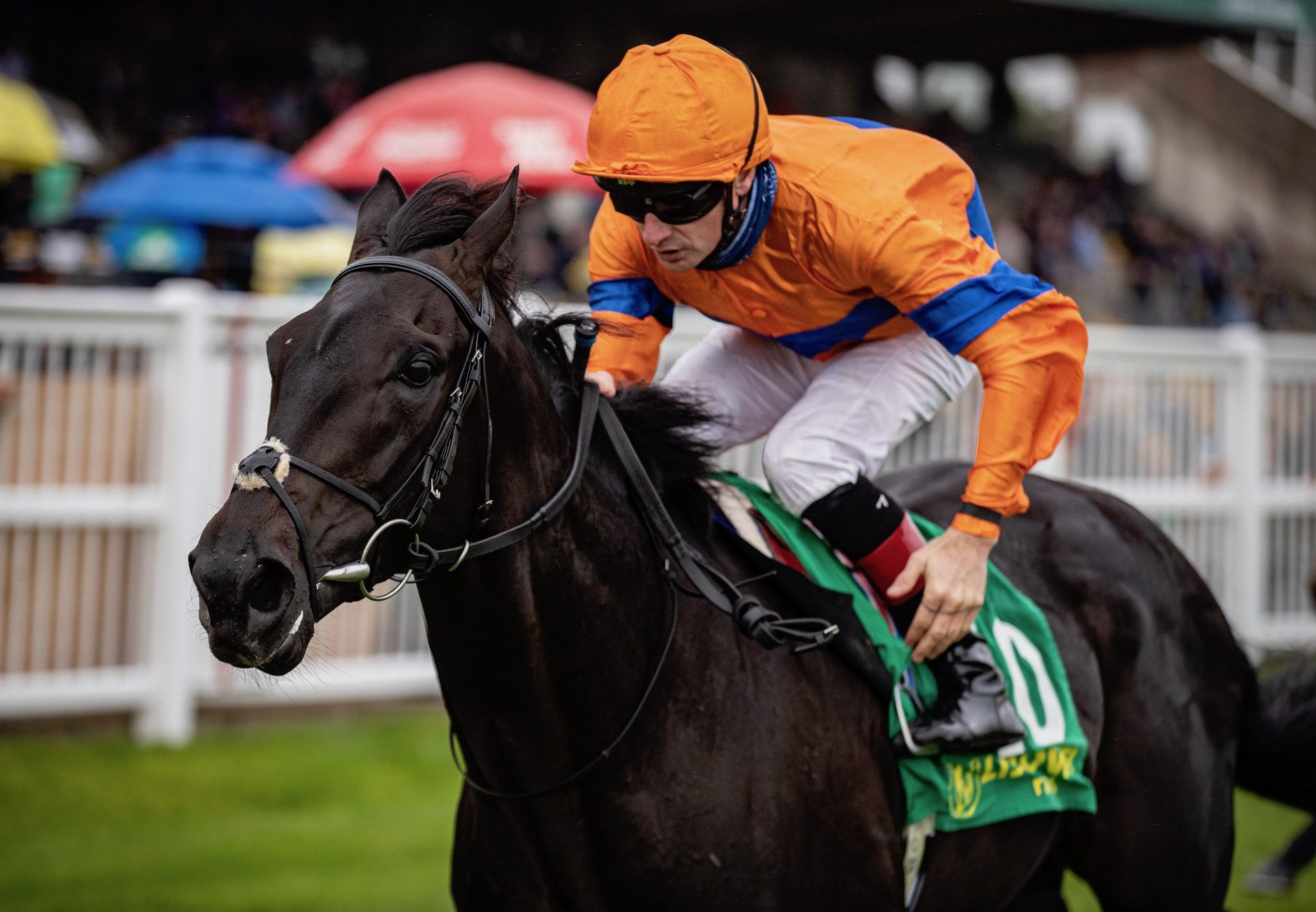 Visualisation (No Nay Never) Lands The Listed Listowel Stakes at Listowel