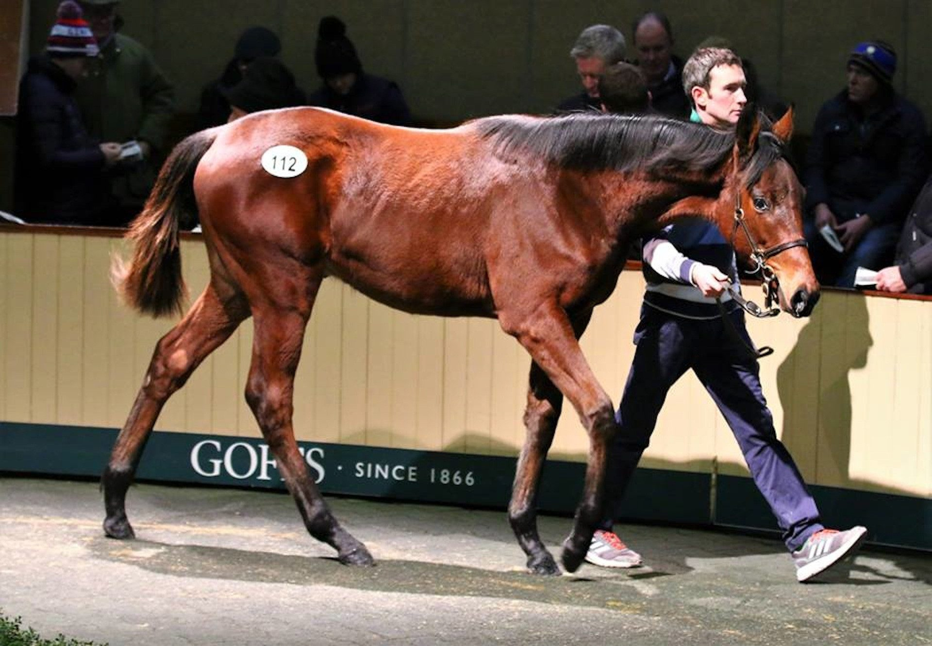 Walk In The Park Colt Sells For €90000 At Goffs