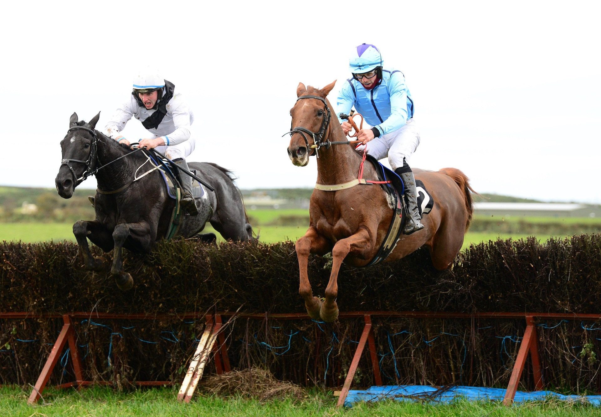 Well Briefed (Mahler) Wins The Mares Maiden At Portrush