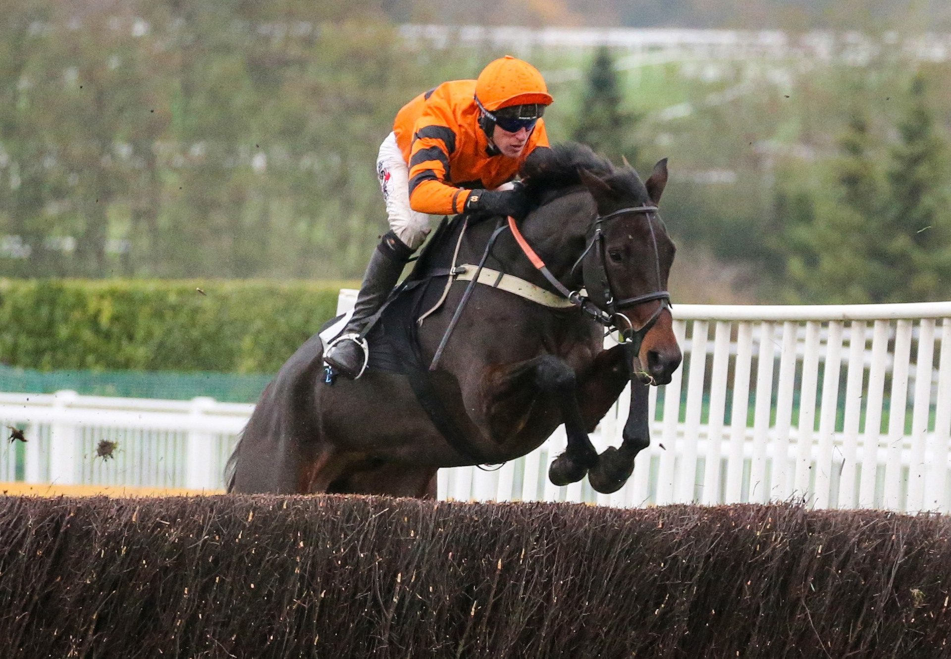 West Approach (Westerner) winning a Grade 3 chase at Cheltenham