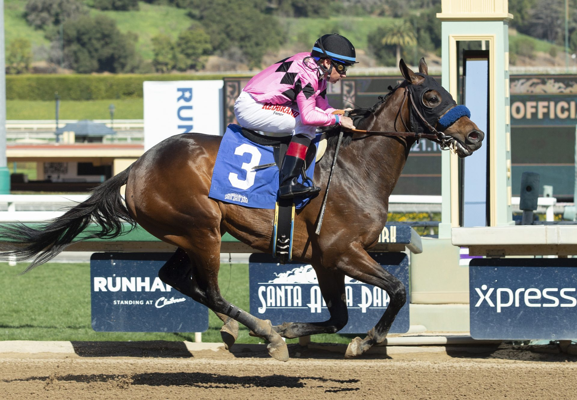 West Sider Uncle Mo Breaking Santa Anita Maiden