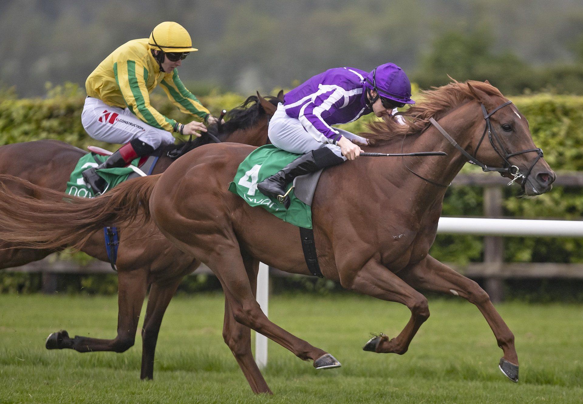 Western Australia (Australia) Wins The Yeats Stakes at Navan