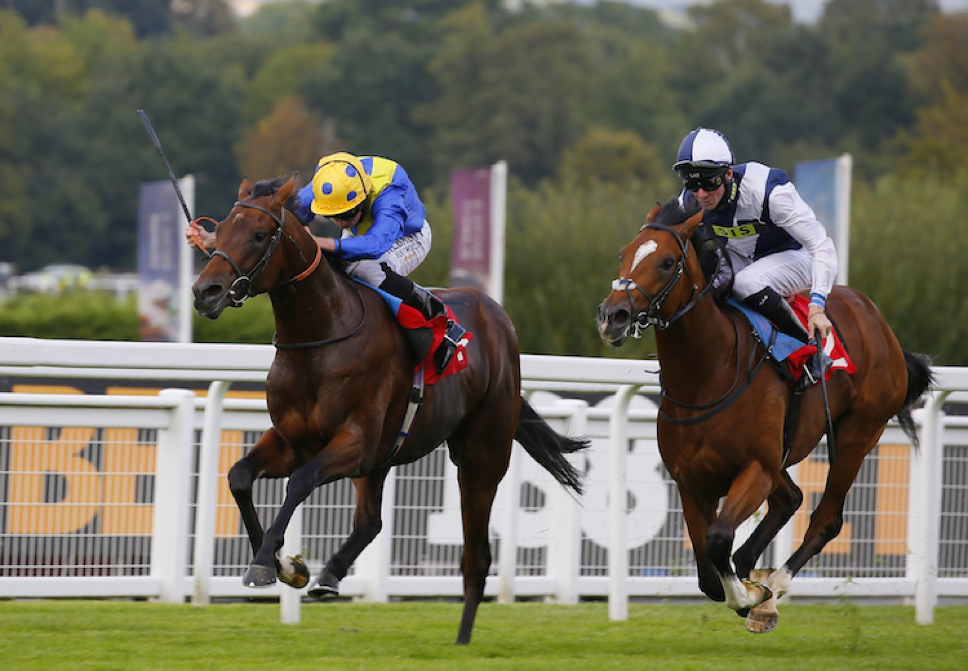Almania (Australia) winning a maiden at Sandown