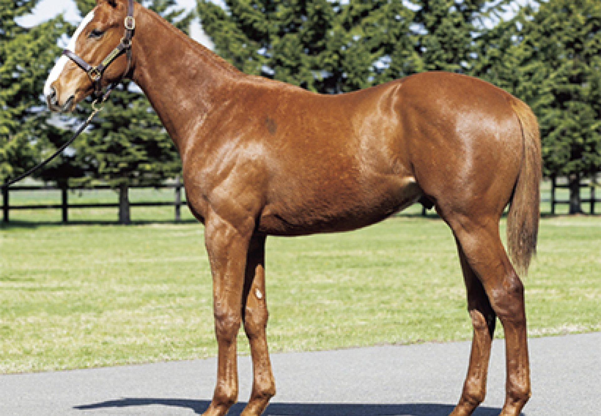Justify X Zipessa yearling colt conformation shot