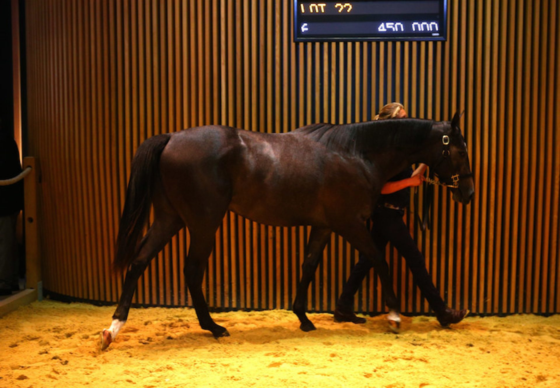 Camelot ex Rock My Soul yearling colt selling at Arqana for €560,000