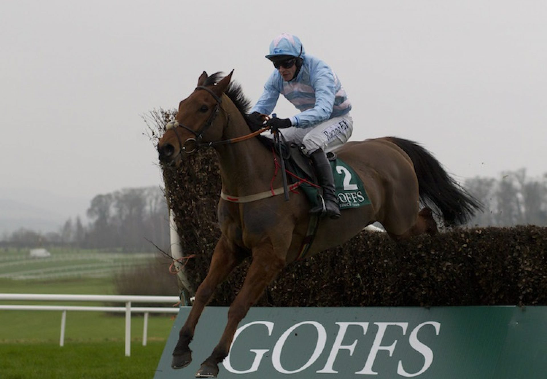 Gleneagles ex Convocate selling for €150,000 at Goffs