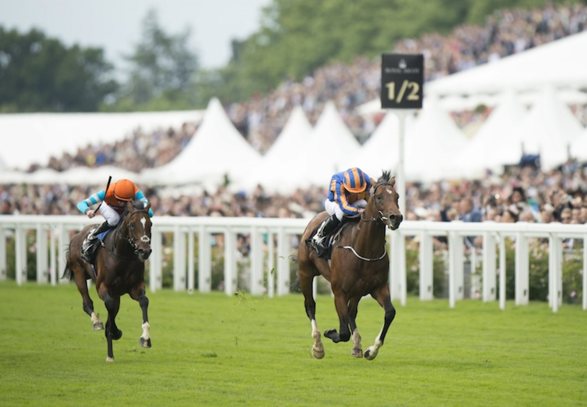 Churchill (Galileo) winning the Chesham Stakes (L) at Royal Ascot