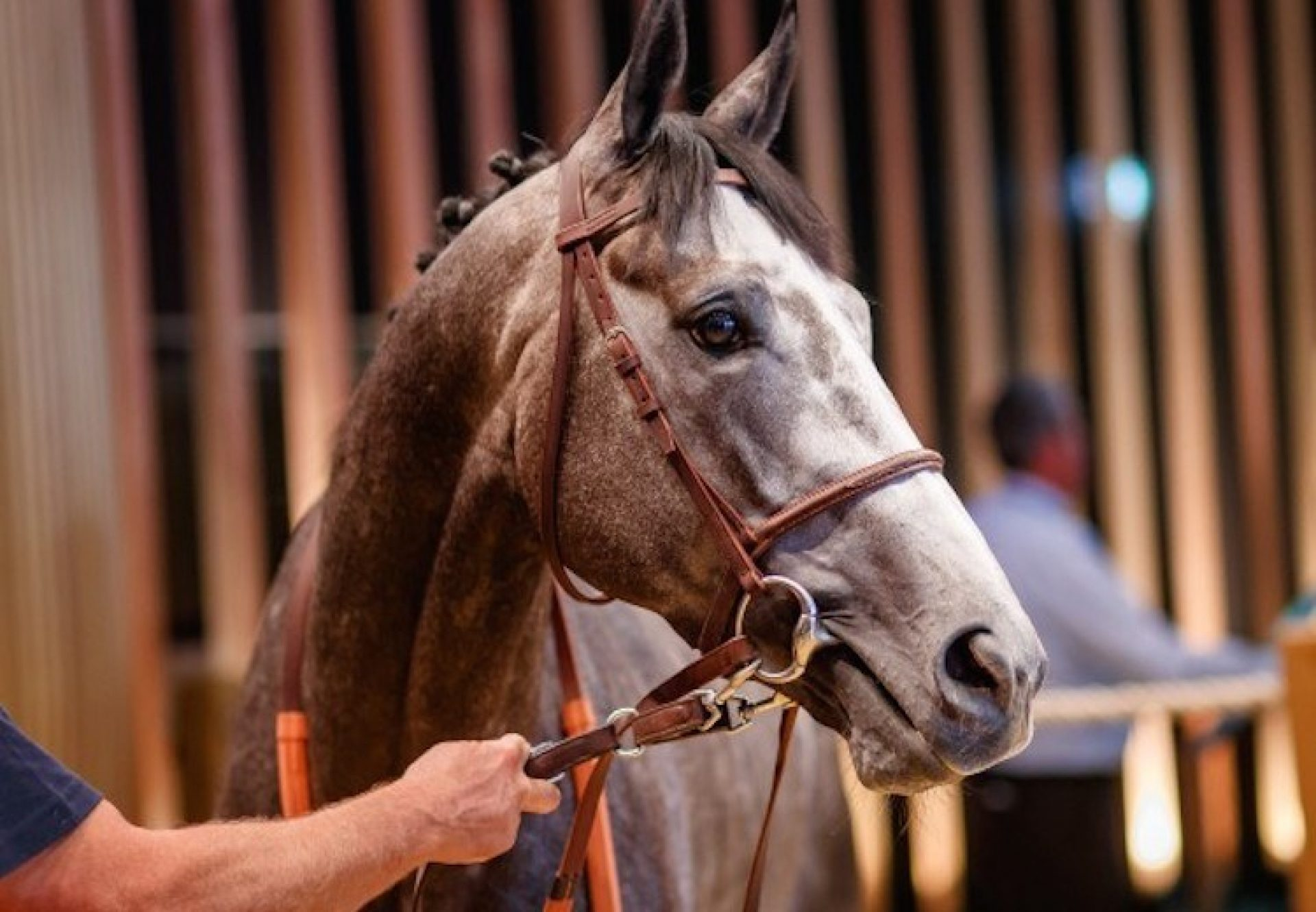 Esteve (Mastercraftsman) selling at the Deauville Summer Sale for €445,000