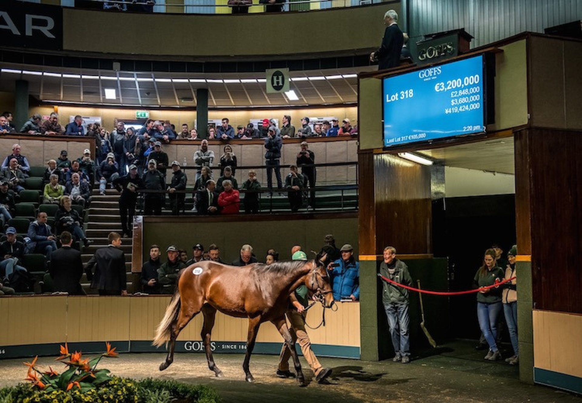 Galileo ex Green Room selling for €3.2 million at the Goffs Orby Sale