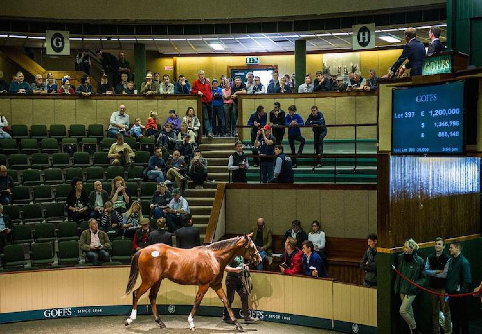 Galileo ex Sent From Heaven selling for €1.2 million at the Goffs Orby Sale