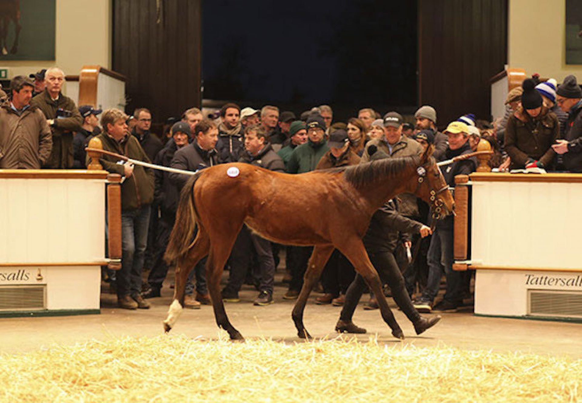 Galileo ex Pearling filly foal selling for 1.7m at Tattersalls